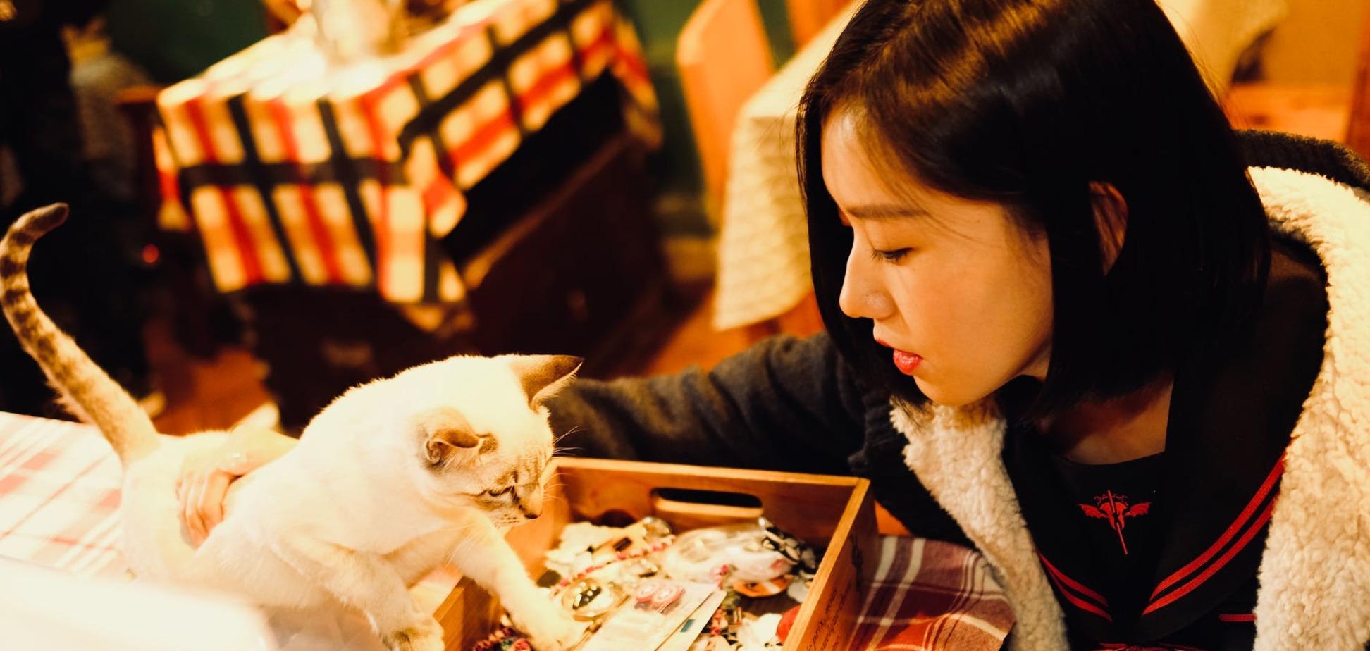 Терапия пушистиками: отель в Японии предлагает гостям необычные услуги