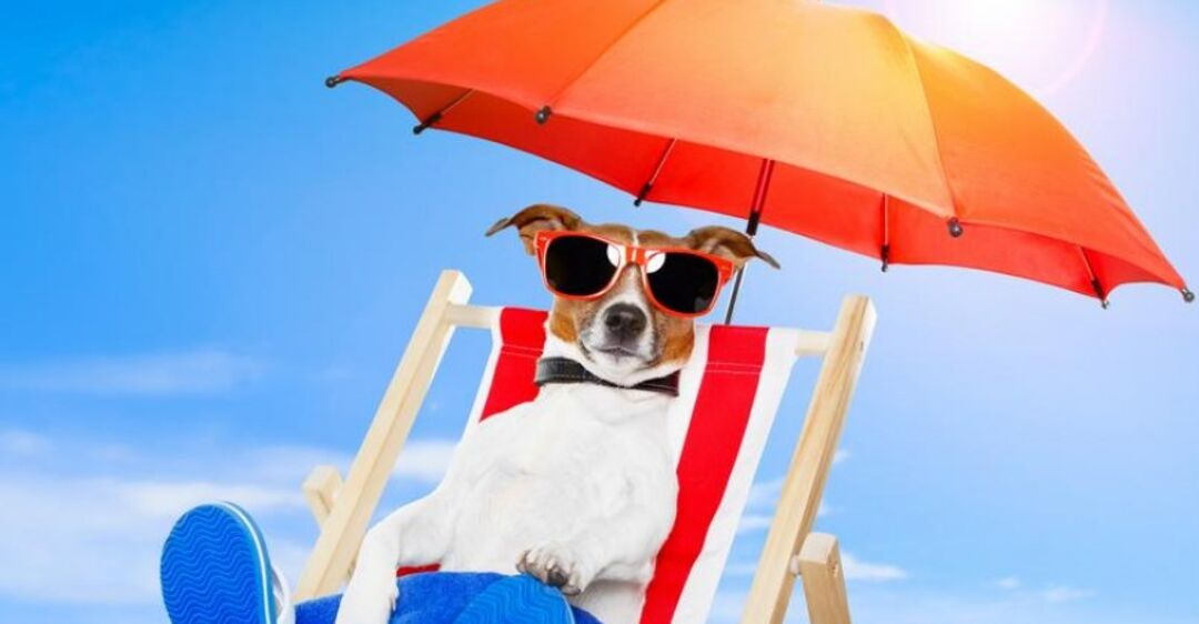 фотообои картинки позитив жарким летом территории нашей страны