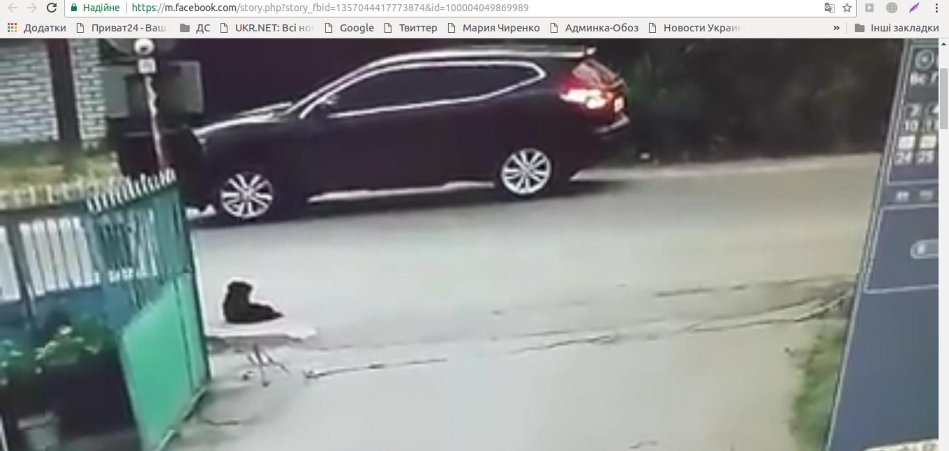 'Ось такий у нас народ': жорстоке вбивство собаки потрапило на відео