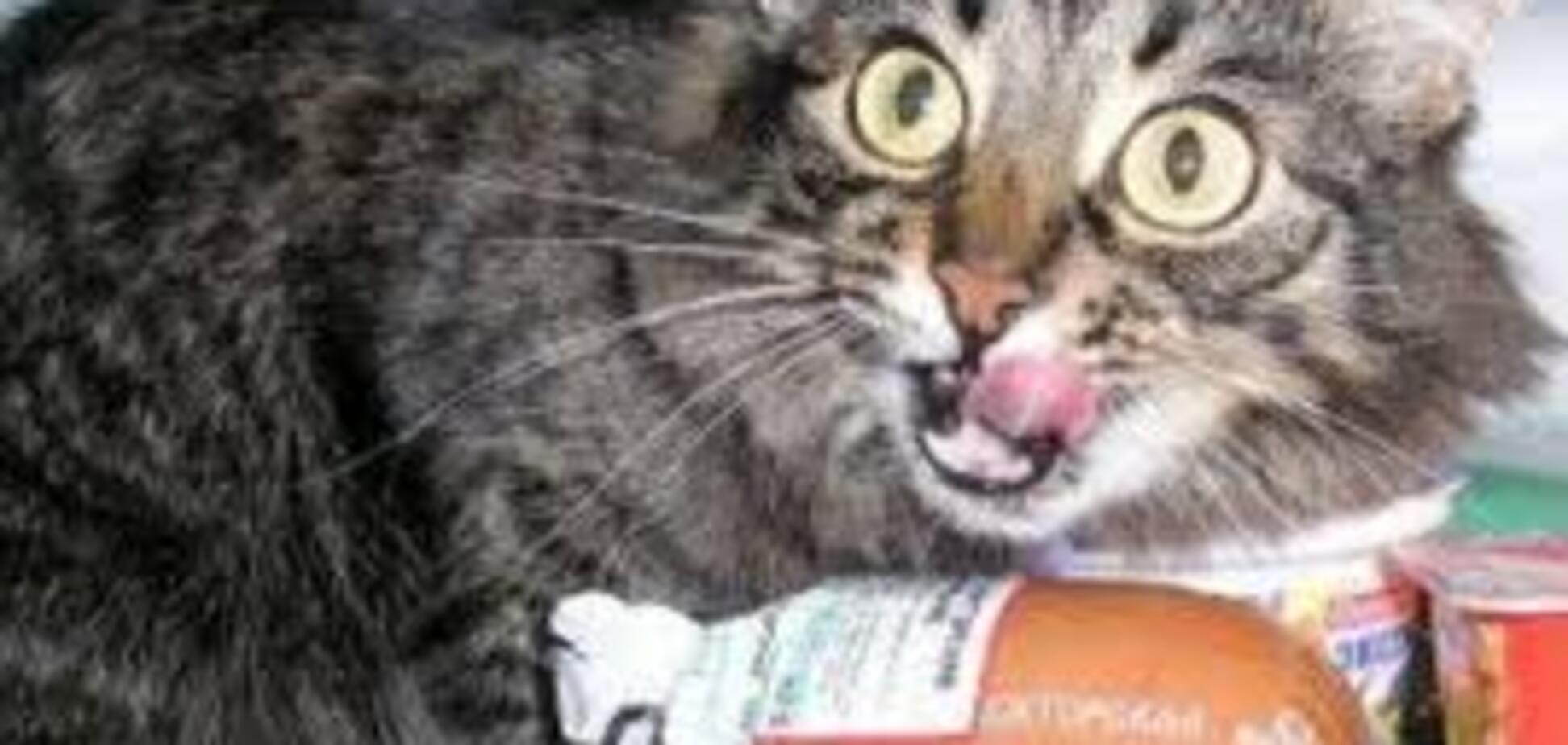 'Хорошая колбаса, надо брать!' Киевлян поразило видео с котом, который 'взломал' супермаркет