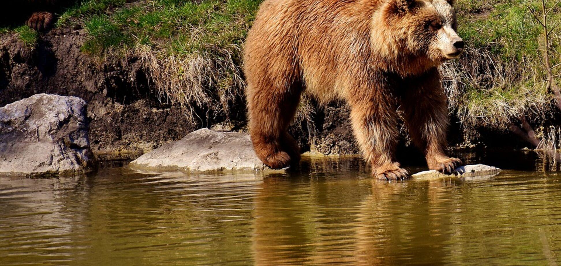 Рятують із ресторанів і цирків: на Львівщині відкрили притулок для ведмедів