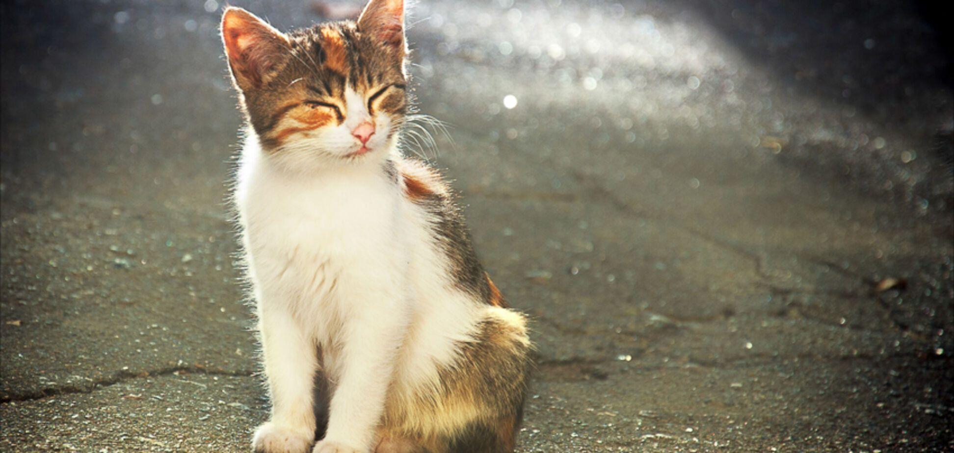 Труїла і замовила вбивство: одеситка оголосила війну котам