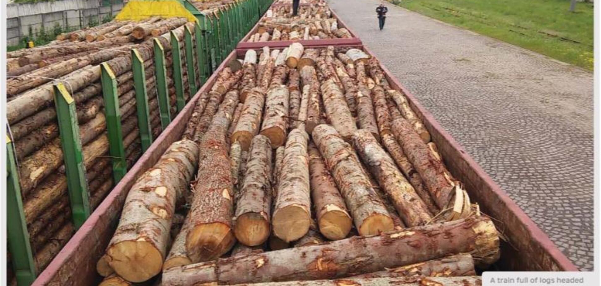 Контрабанда лісу-кругляка з України до Євросоюзу має катастрофічні масштаби