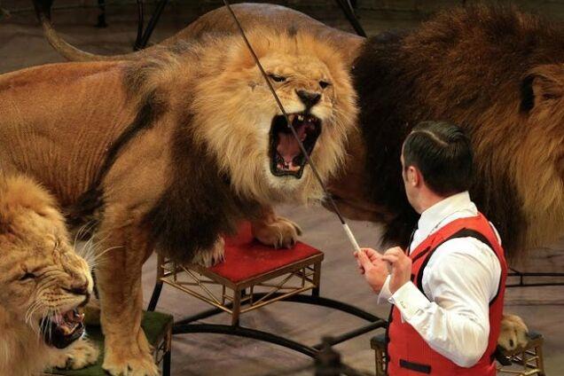 Кривавий цирк: як тварини атакують глядачів