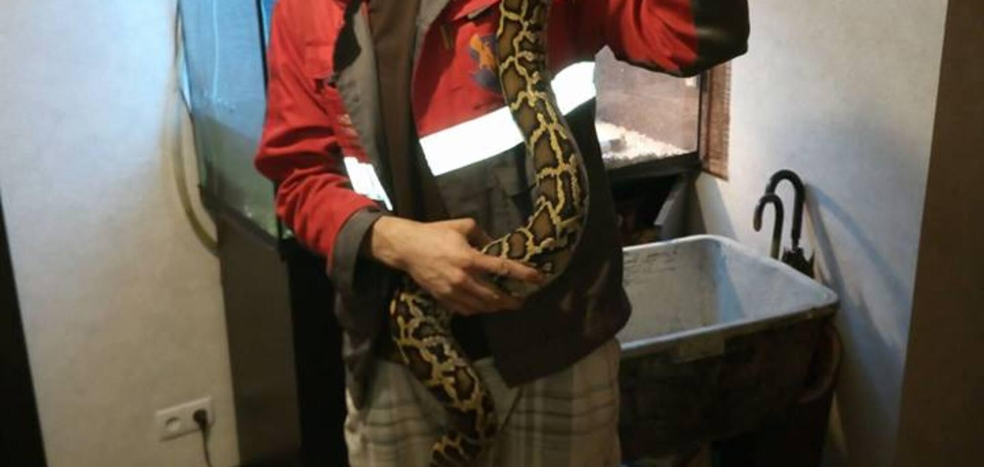 Свисала с фонаря: огромную змею словили в Киеве