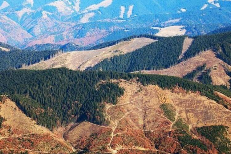 Як зникає карпатський ліс: активісти показали масові вирубки на Івано-Франківщині (відеофакт)