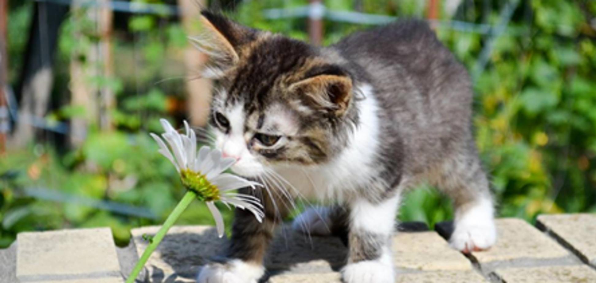Друг у подарунок: кошенята Дніпра, які шукають дім