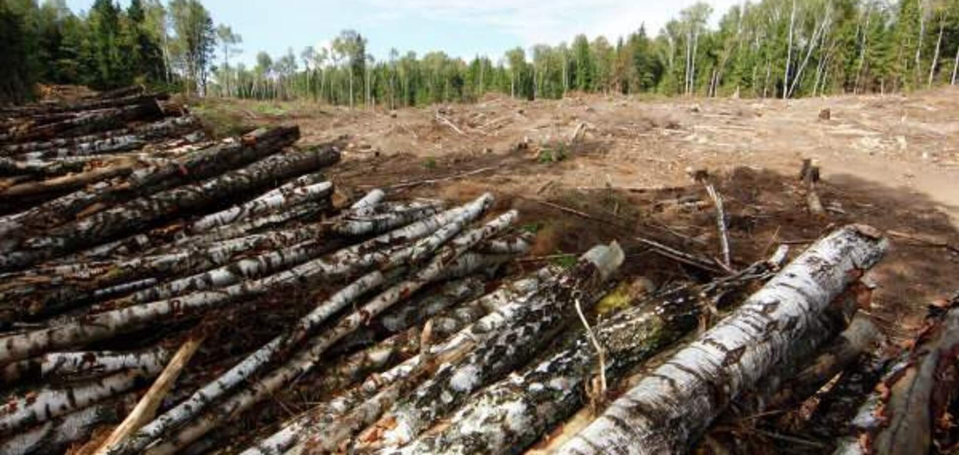 Закон о контрабанде леса могут не подписать, на Порошенко уже вышли люди, - Галасюк