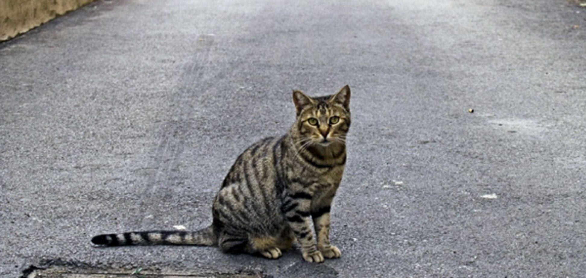 В Україні зобов'яжуть вносити всіх домашніх тварин у реєстр