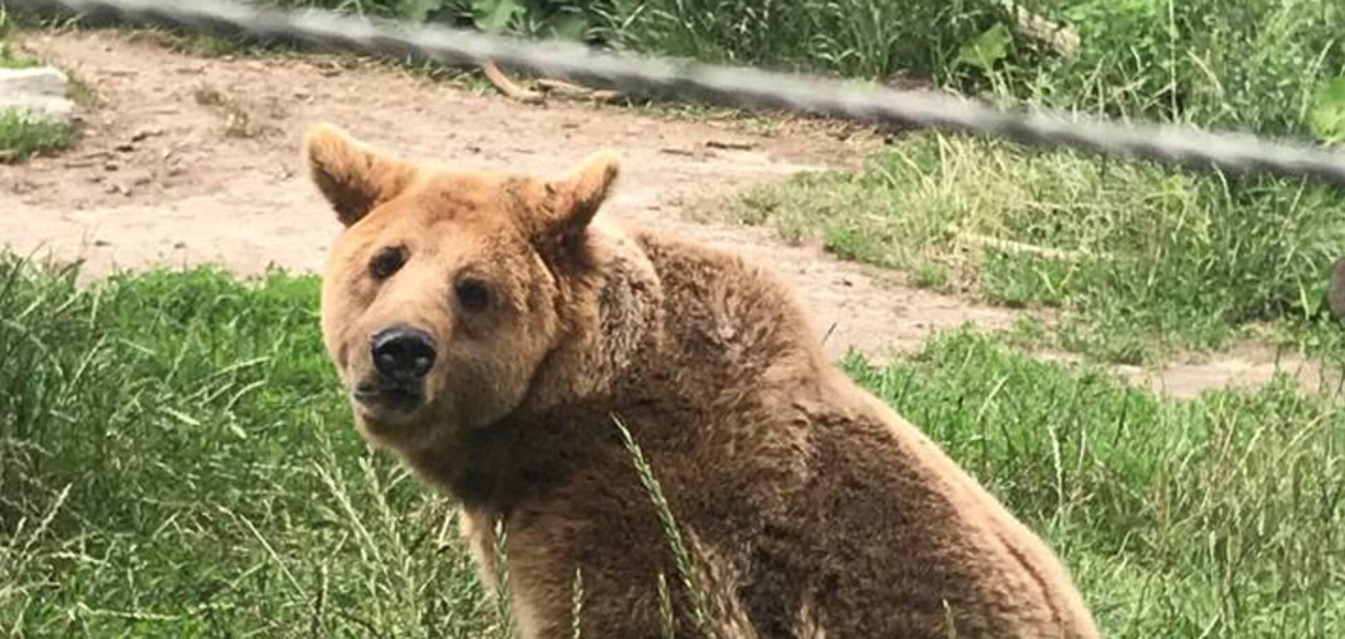 'Слезы наворачиваются': зоозащитник рассказал об уникальном приюте для медведей под Житомиром