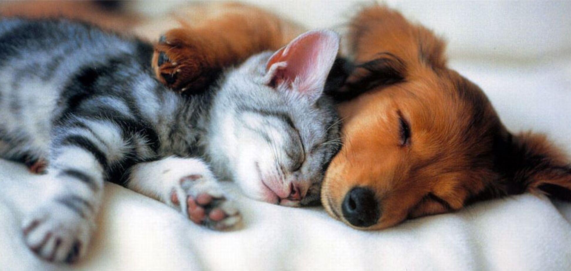 Запретить продажу кошек и собак: в Украине предложили радикальный шаг