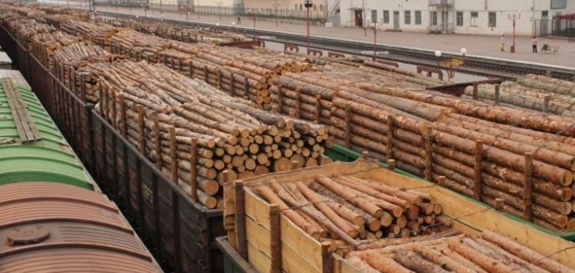 Вопреки Кабмину Порошенко ветировал закон о контрабанде леса: что это значит
