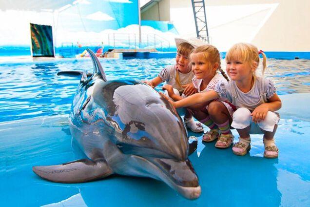 5 причин не відвідувати дельфінарій