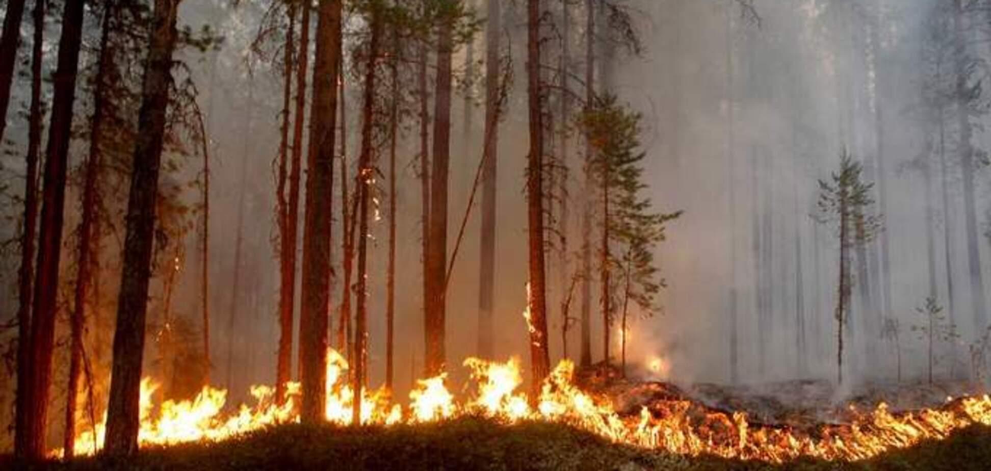 Пожары в Швеции: стало известно, сколько леса уже уничтожил огонь