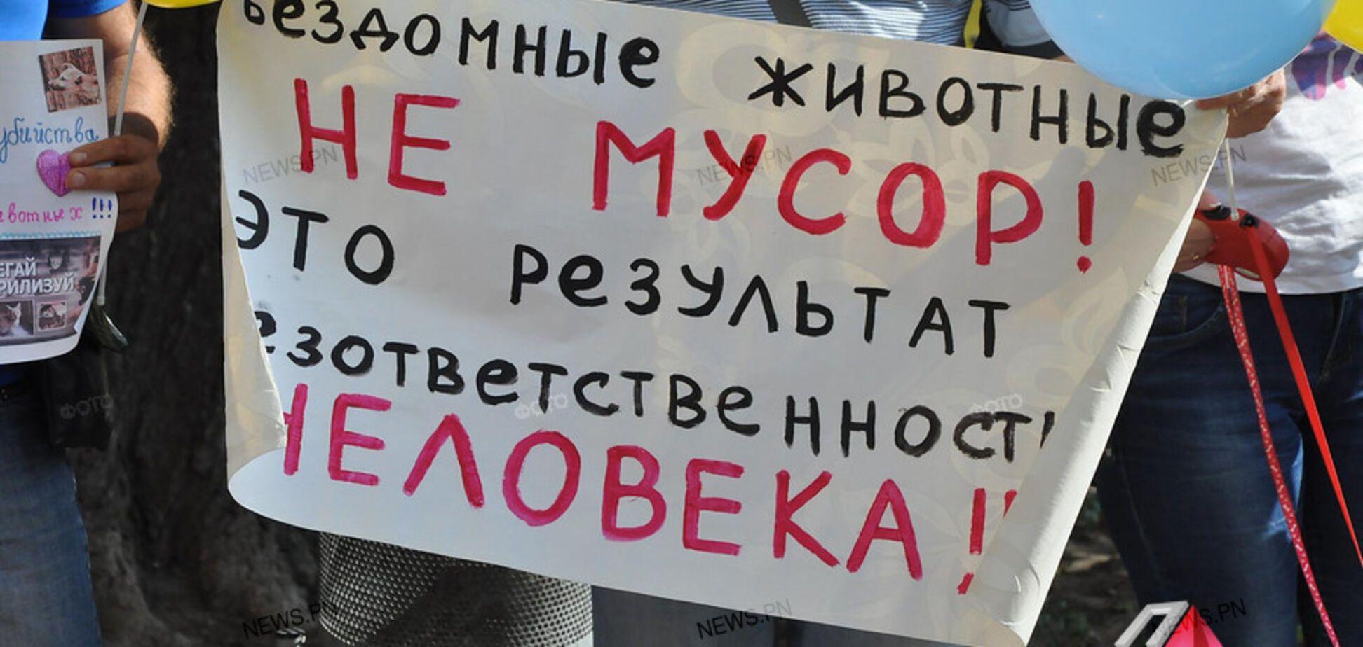 Скандал с убийством собак в Николаеве: зоозащитники забили тревогу