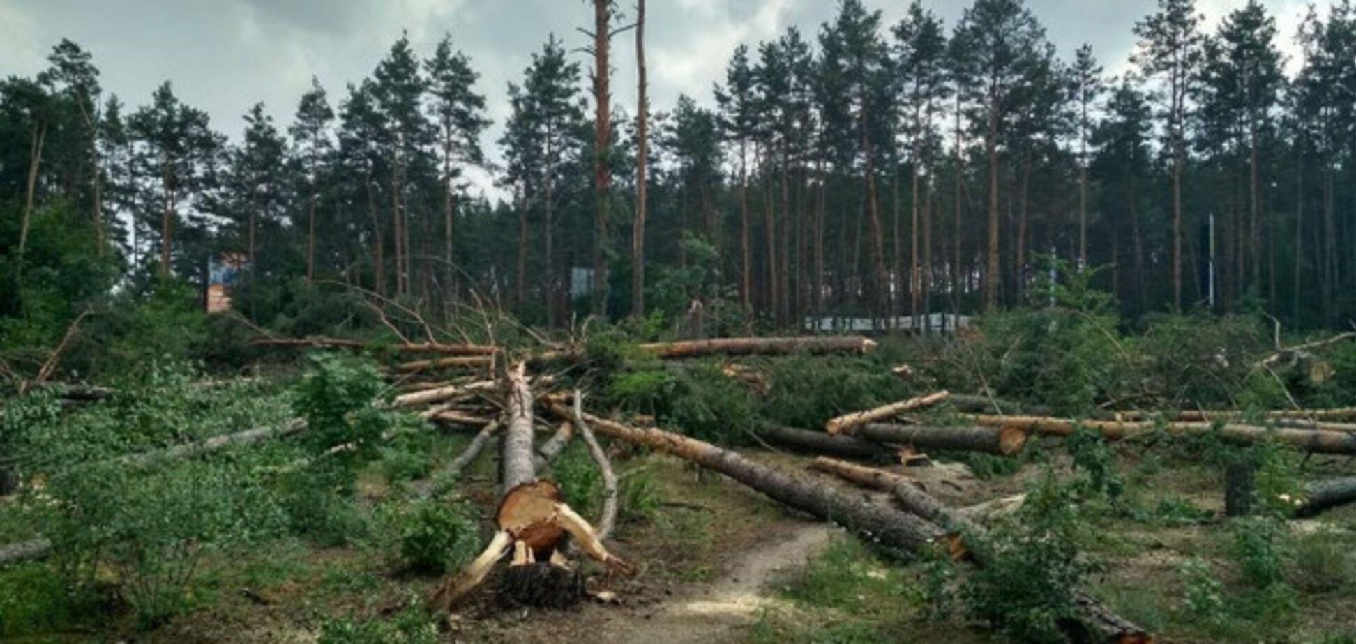 Під Києвом вирубали величезну ділянку лісу: фото і відео