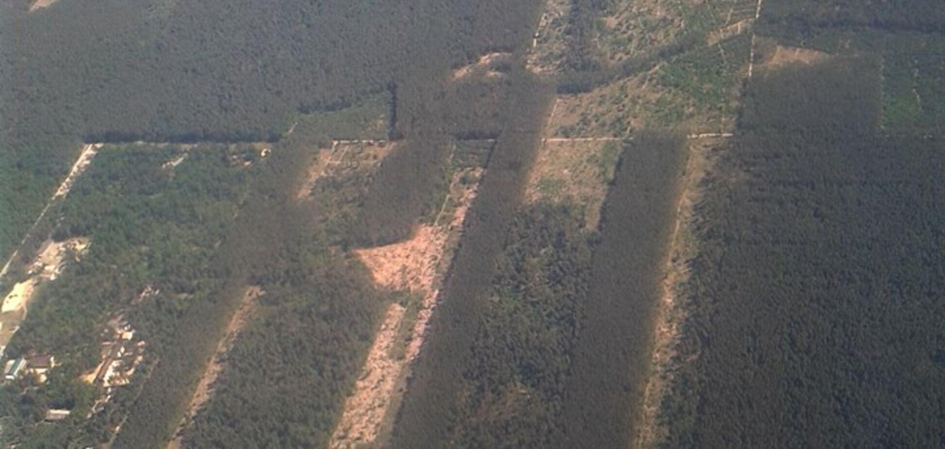 'Короед прошелся?' Масштабную вырубку леса в Киеве сняли с воздуха