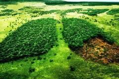 Український ліс або дружба з ЄС