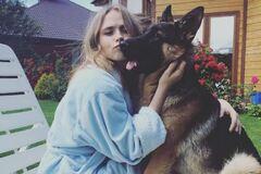 Топ-10 зіркових собак України: як вони виглядають і хто їхні господарі