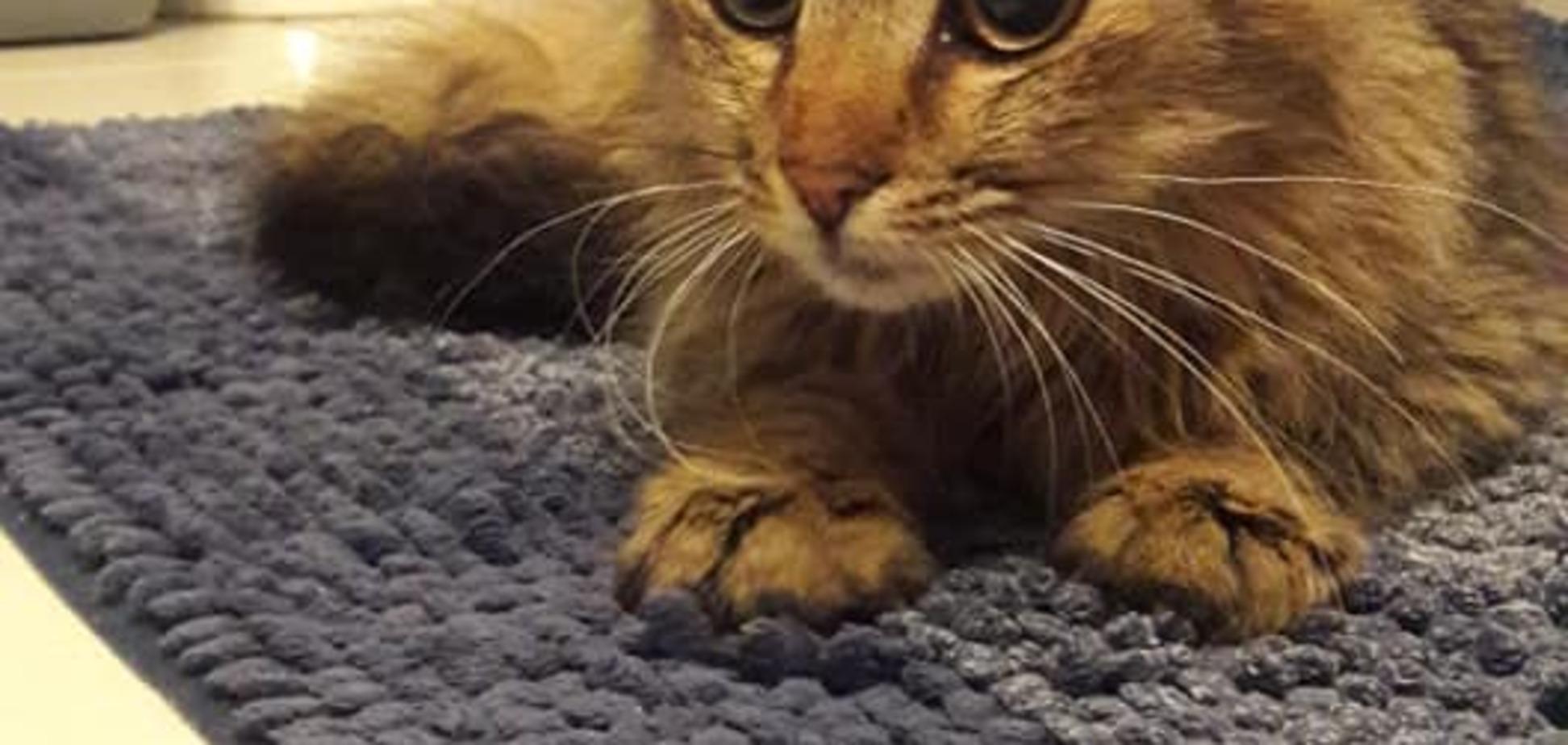 Стала відома доля кішки, яка 'зламала' прилавок з ковбасою в Києві