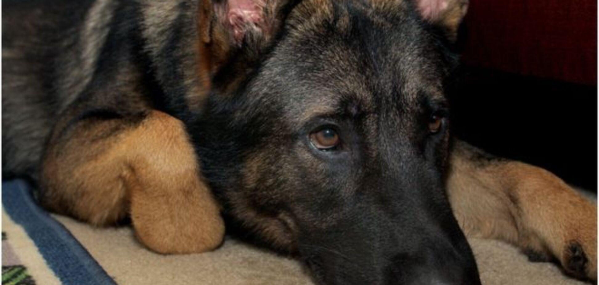 В Италии погиб знаменитый пес-спасатель