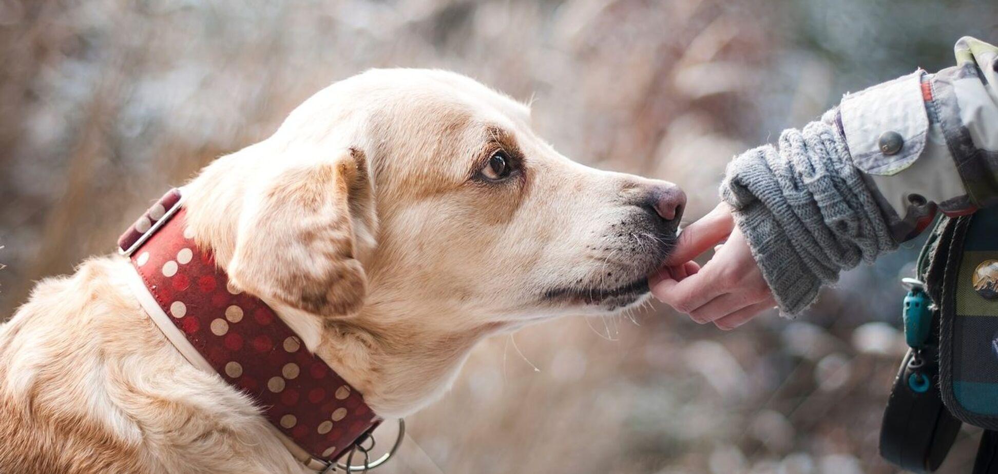 Запомните, сидя дома - не помочь бездомным животным