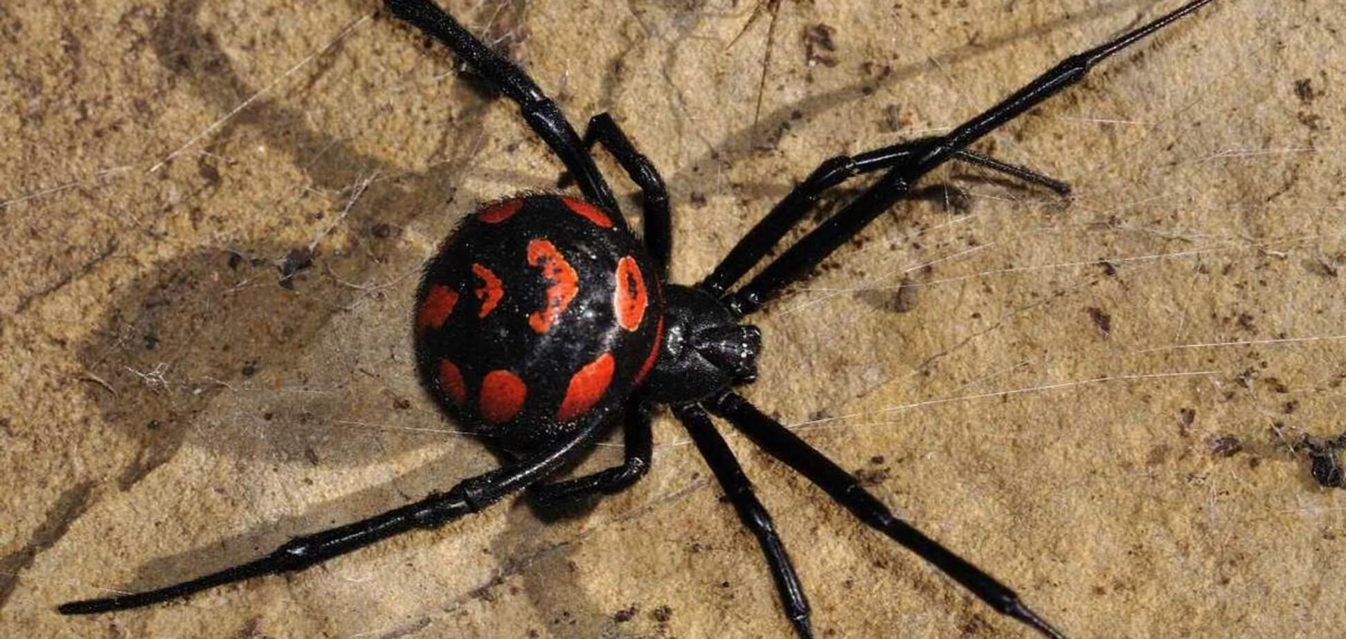 Нашестя отруйних павуків в Запоріжжі: городян попередили про небезпеку