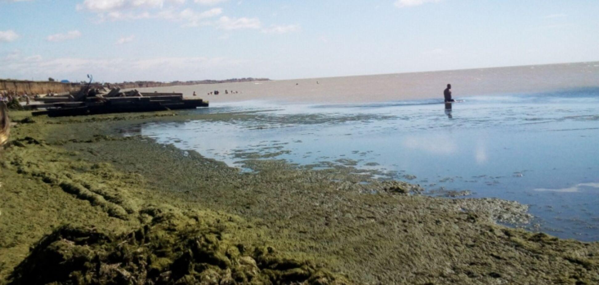 На известном украинском курорте позеленели пляжи: видео