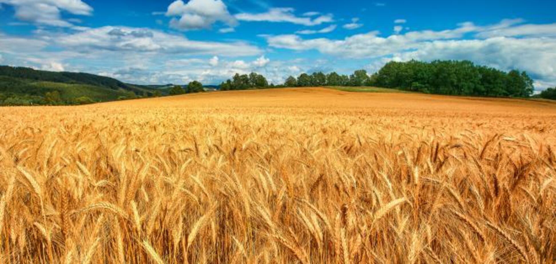 Мартынюк: контроль за использованием СЗР предотвратит отравления пестицидами