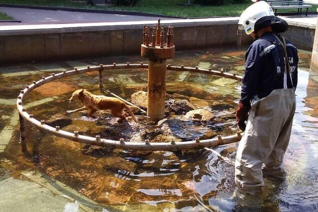 Пес не зміг самостійно вибратися з фонтану