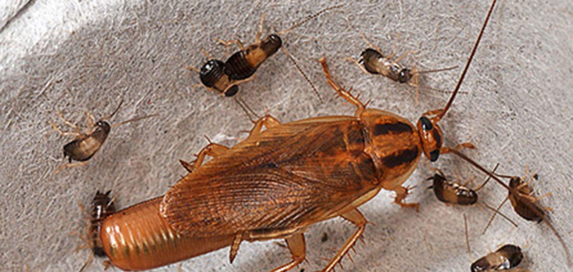 'Чувствуют себя царьками': пациентов испугало нашествие тараканов в больнице Запорожья. Видео