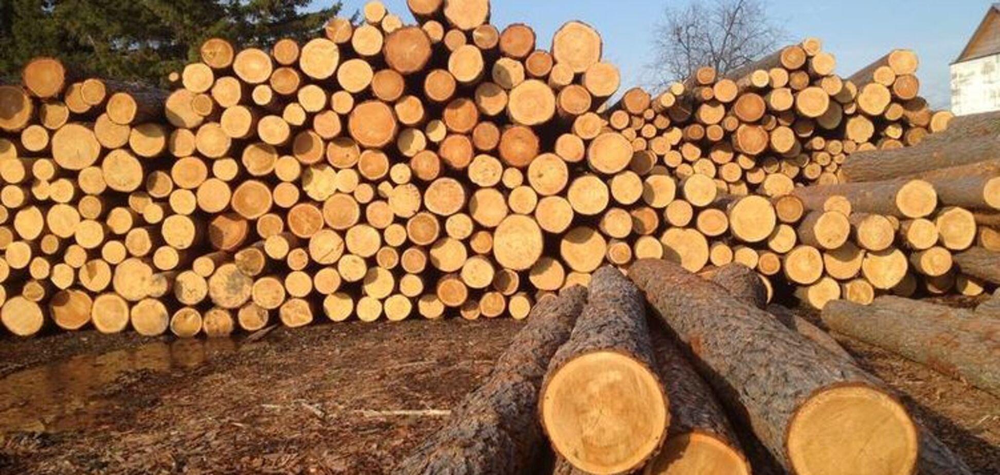 Мартинюк: експортувати потрібно продукцію, а не сировинну деревину