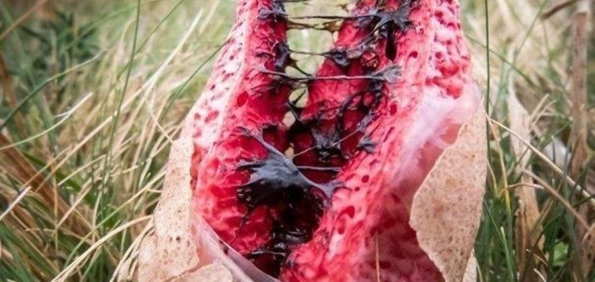 Пощекотать себе нервы: опубликованы 15 зловещих снимков природы