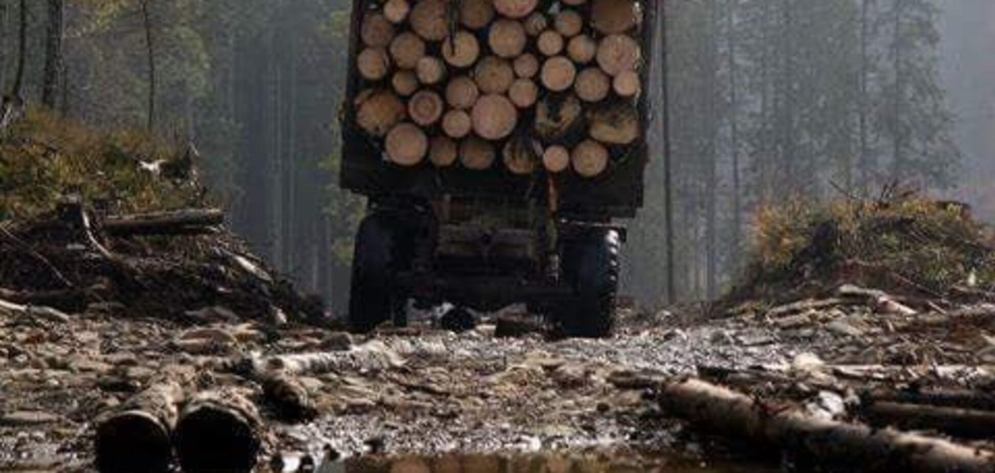 Контрабанда леса из Украины