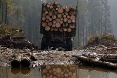 Контрабанда лісу з Україну