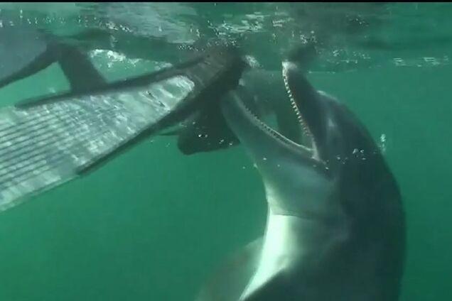 Похотливый дельфин натворил бед во Франции: что случилось