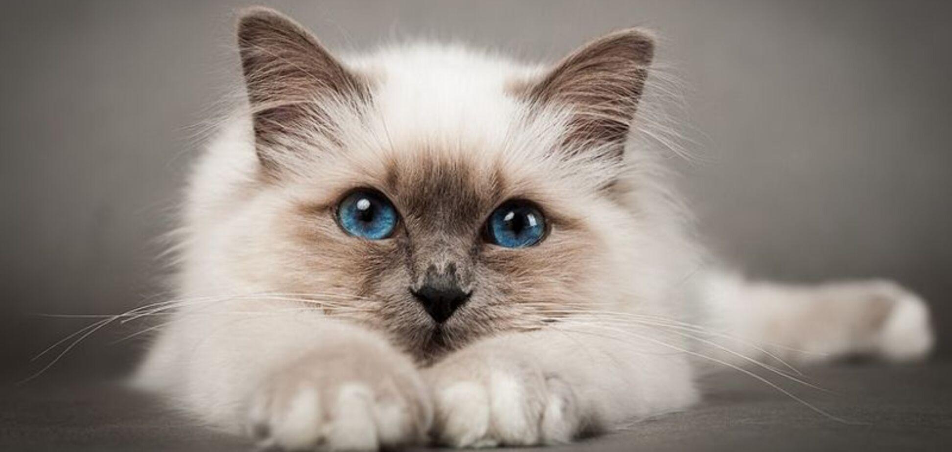 День котів 2018: привітання і картинки