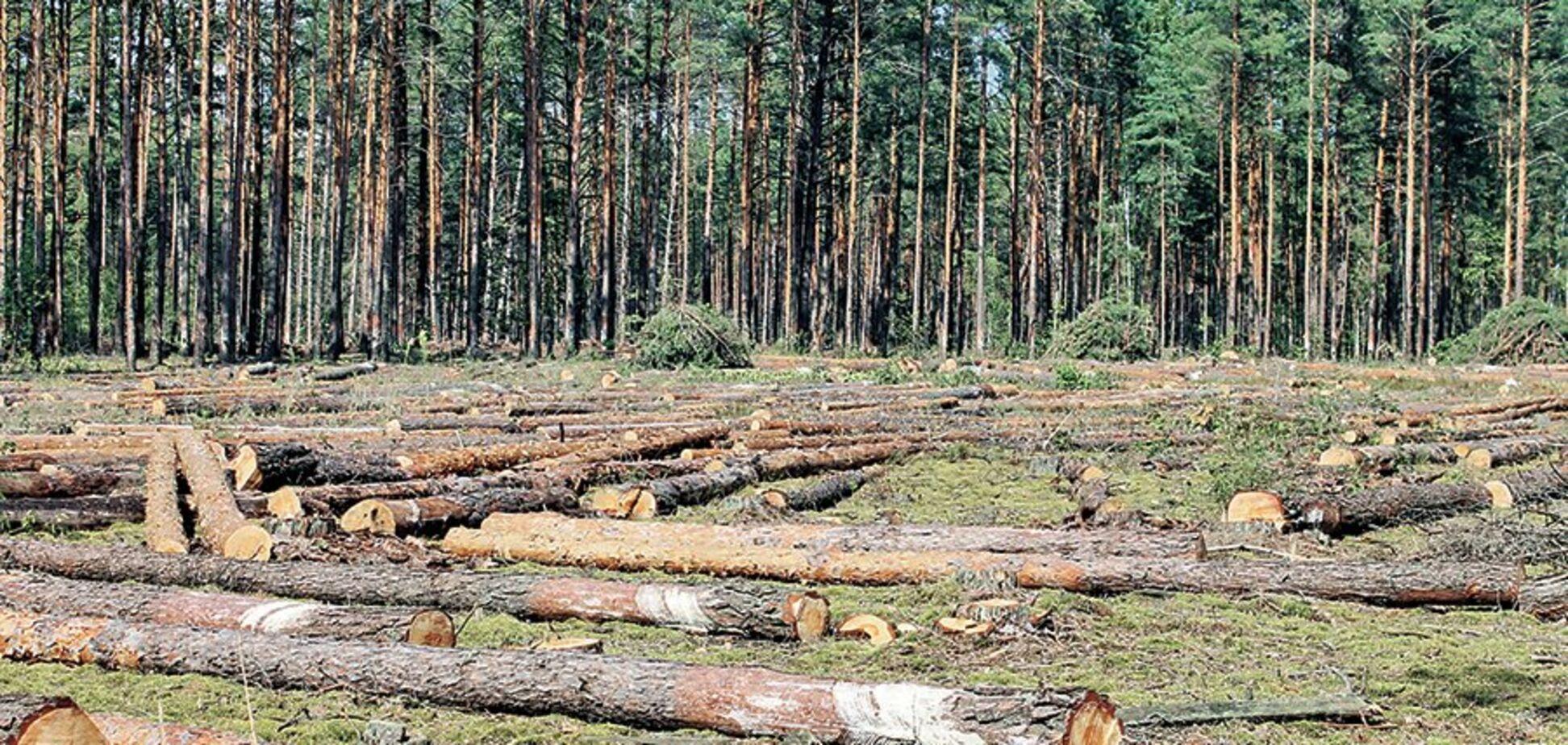 Над Украиной нависла экологическая катастрофа: как спастись