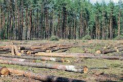 Над Україною нависла екологічна катастрофа: як врятуватися