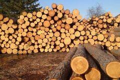 Галасюк: Рада посилила, а не скасувала мораторій на експорт лісу