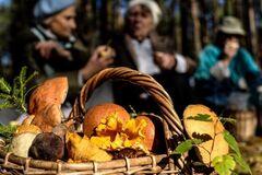 Українці помирають від отруйних грибів: як не стати жертвою