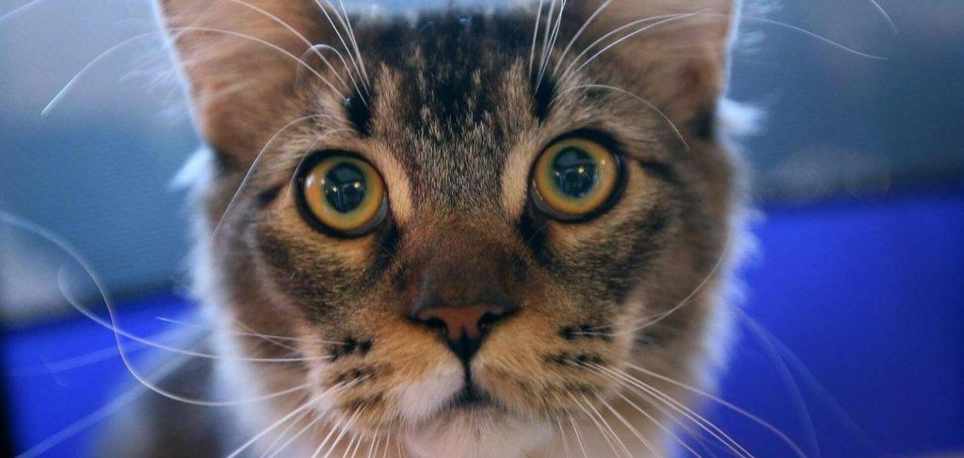 Гигантский кот покорил посетителей выставки во Львове