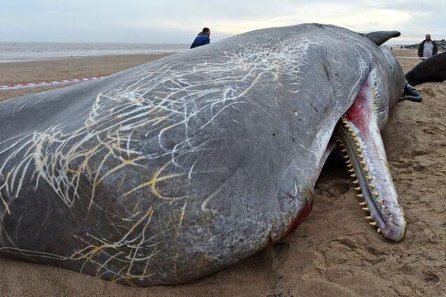 Могут убить! Назван топ-10 самых опасных пляжей мира