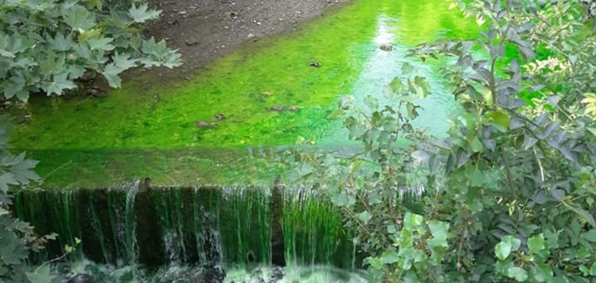 Река позеленела: в Крыму назревает экологическая катастрофа
