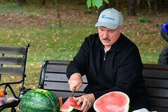 'Королева Анна': Лукашенко похвалився 'нетиповими' кавунами на дачі