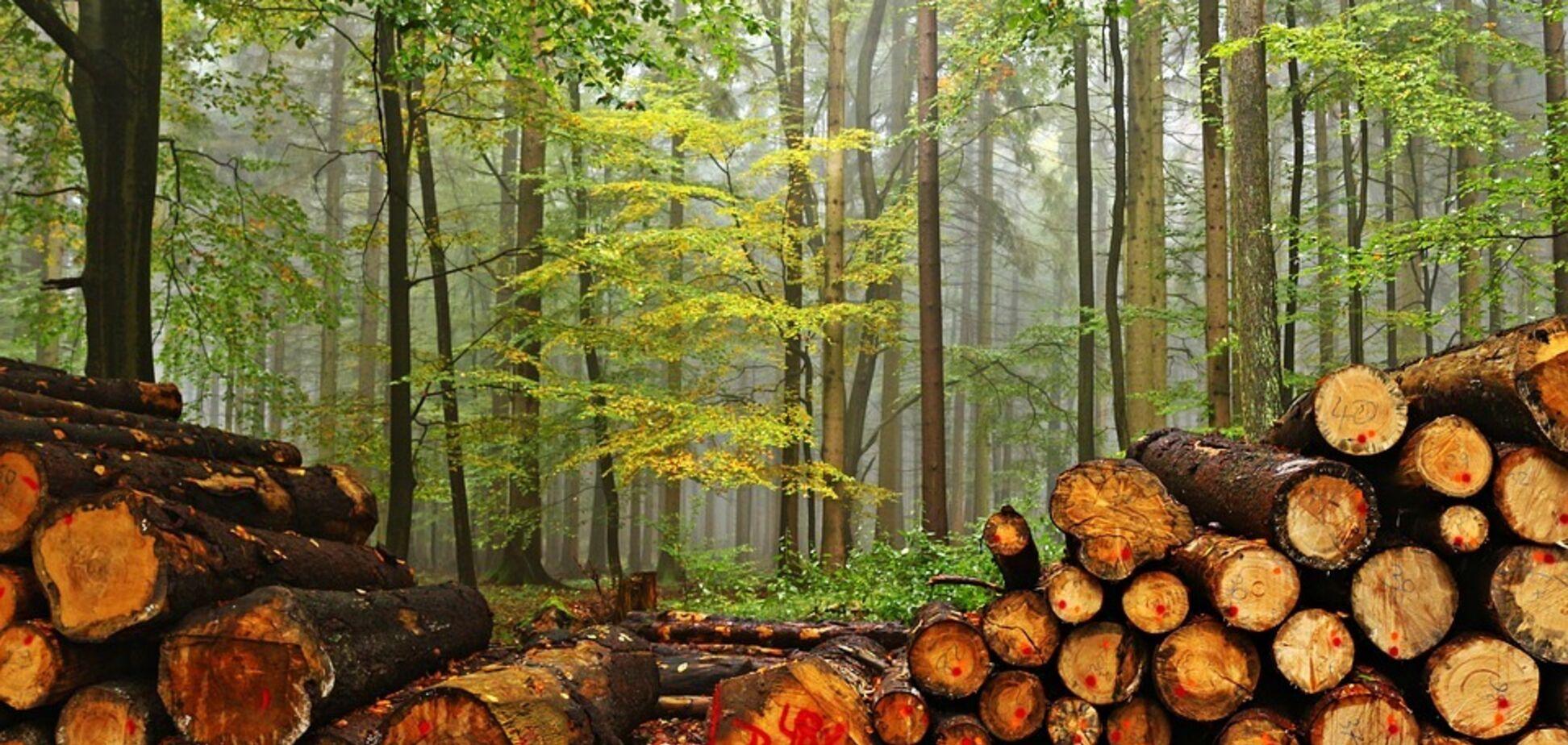 За контрабанду леса - 12 лет: раскрыты все детали нового украинского закона