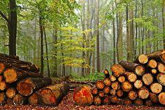 За контрабанду лісу - 12 років: розкрито всі деталі нового українського закону
