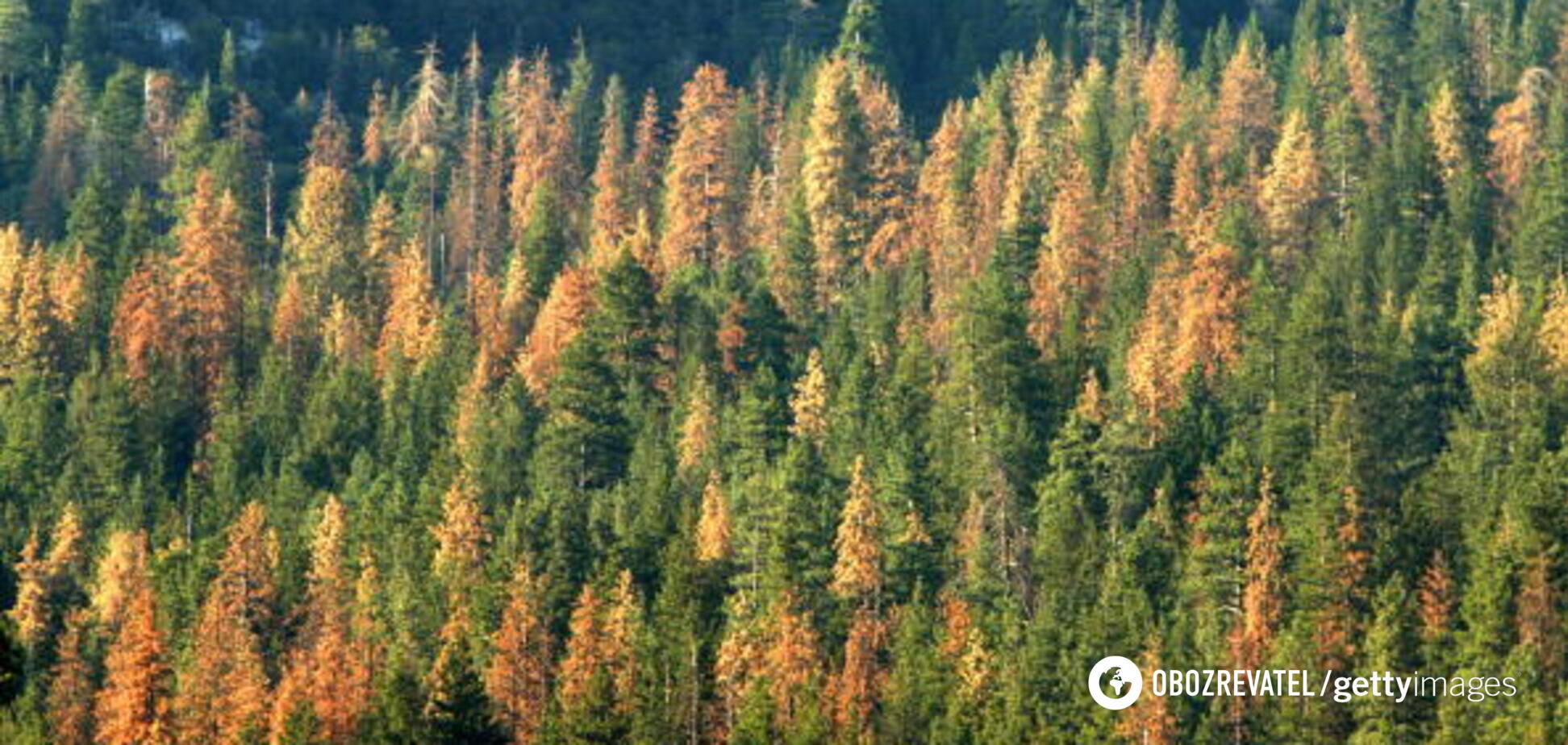 ''Это законно'': губернатор Херсонщины объяснил вырубку леса в регионе