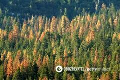 ''Це законно'': губернатор Херсонщини пояснив вирубку лісу в регіоні