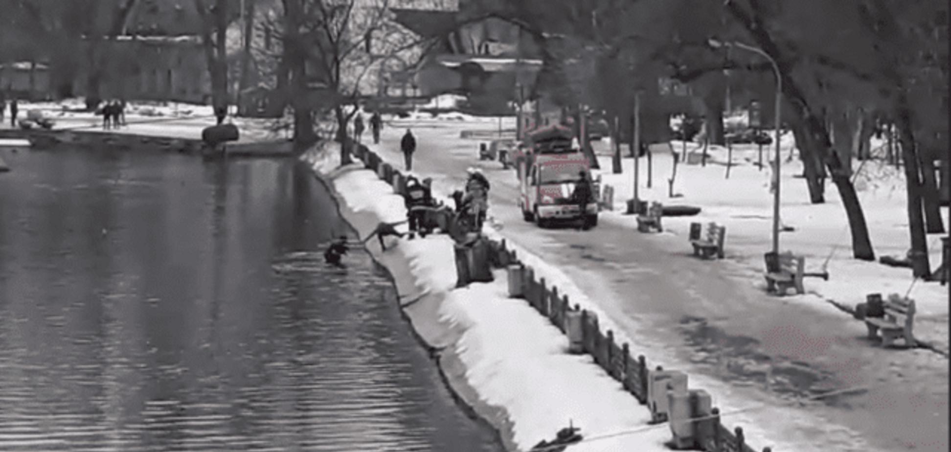 Героїчний вчинок: у Дніпрі чоловік пірнув у крижану воду заради дворняжки. Відео